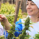 marijuana-nuns-header