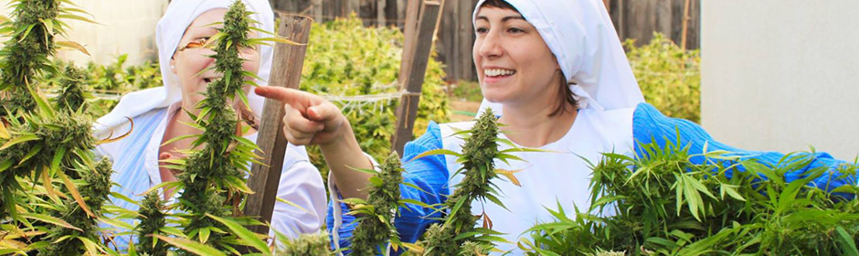 marijuana-nuns-header