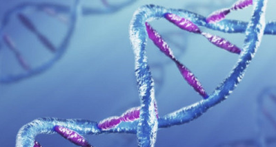 dna profiling research papers This paper is the third in a series by the australian institute of criminology  a  range of new dna profiling techniques continues to be developed and  the  second considers empirical research evaluating dna evidence and.