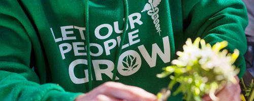 Buy California Marijuana Plants For Sale