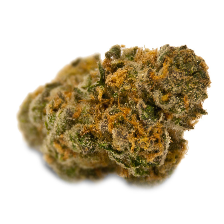Buy Colorado Cannabis Seeds Online For Sale