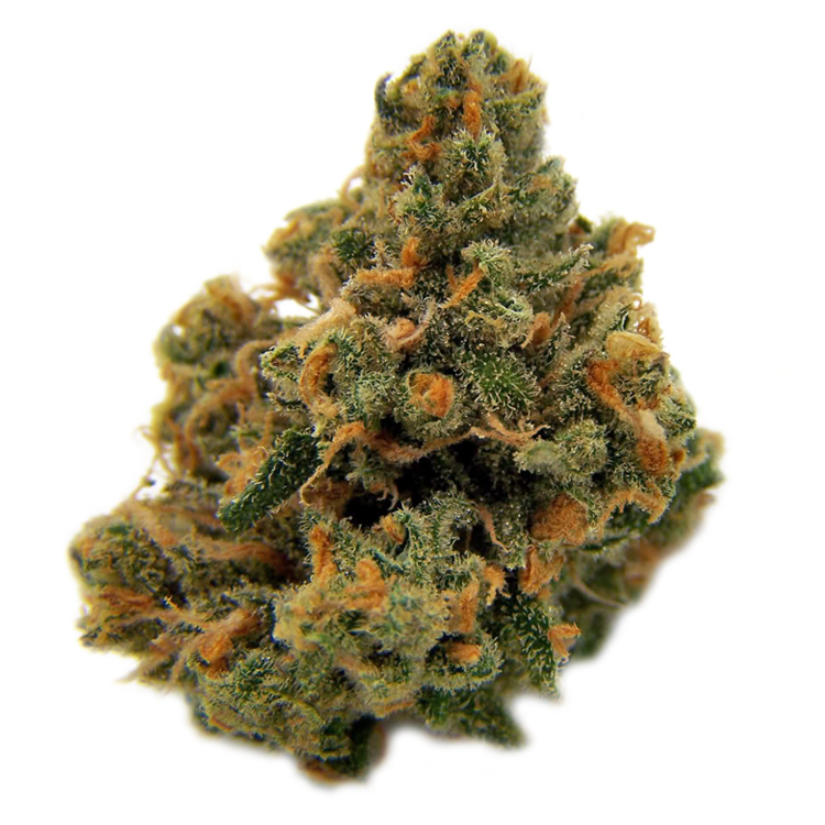 Buy Oregon Cannabis Seeds Online For Sale