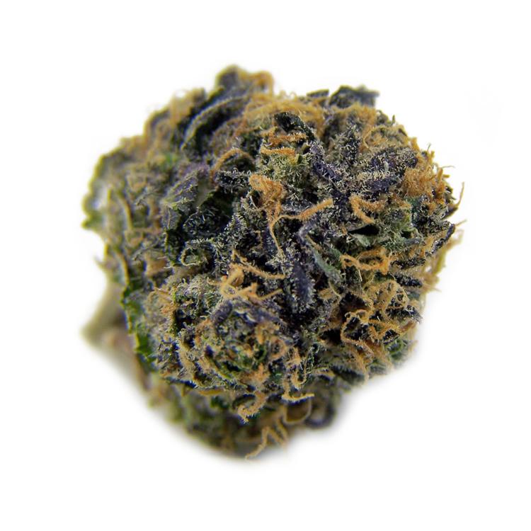 buy utah cannabis seeds online for sale